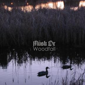 Musk Ox –Woodfall